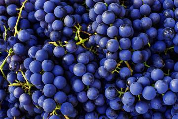 Red wine grapes background. Dark blue wine grapes. Fototapete