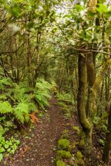Regenwald mit Pfad durch den Dschungel