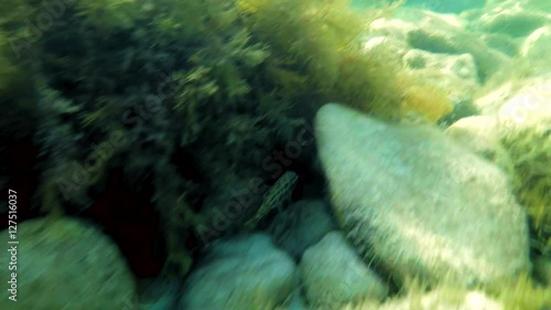 Diving along a reef of a tropical underwater world while passing colourful fish and corals