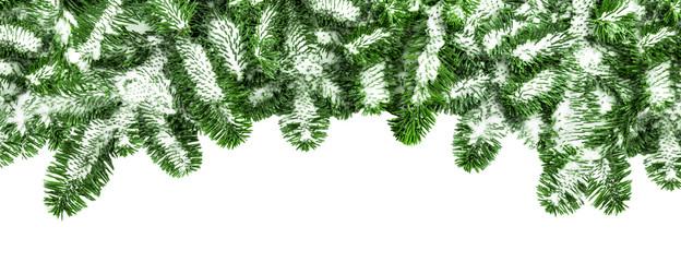 Grüne Tannenzweige vor weißem Hintergrund als Panorama