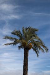 Green palm tree on the blue sky  in izmir  eagean coast seaside