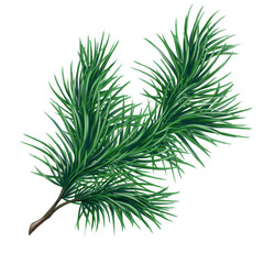 Christmas pine branch, watercolor illustration isolated on white background