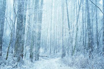 冬の雑木林, 雪道