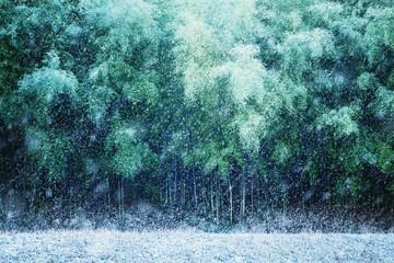 竹, 竹林, 冬, 雪景色