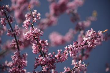 Shallow DOF - blossoming tree