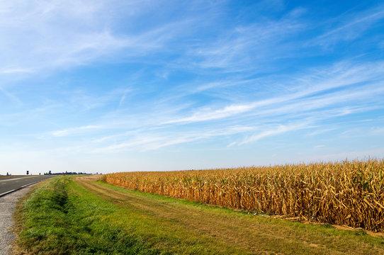 American farmland, landscape with blue sky