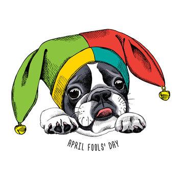 French Bulldog portrait in a Fools hat. Vector illustration.