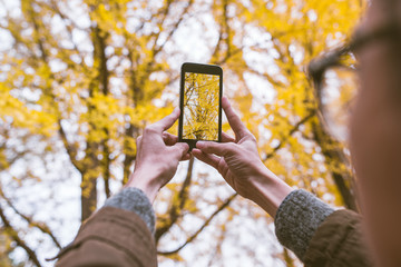Male tourist holding smartphone taking photo of ginkgo leaf in a