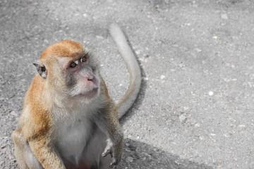 monkey nature in Thailand Closeup