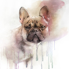 Illustration of the French Bulldog. Dog is man's best friend. Watercolor Animal collection: Dogs. Watercolor Dog Pug Portrait - Hand Painted Illustration of Pets. Good for banner, print T-shirt.