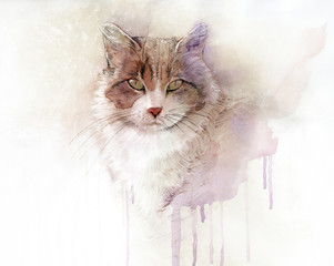 Watercolor portrait of the cat. Animal collection: Cat. Art illustration