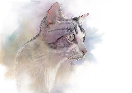 Cute cat. Watercolor portrait of a cat. Drawing of a cat with yellow eyes executed in watercolor. Good for print T-shirt. Hand painted watercolor cat illustration. Art background, banner for pet shop.