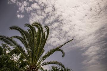 Palmier avec le ciel