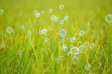 The rainbow bubbles on green background
