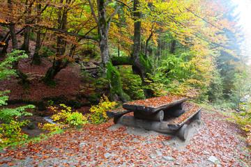 Golden autumn in beech forest in Carpathians
