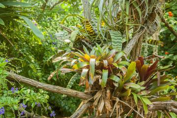 various jungle plants