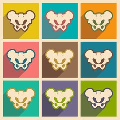 Set flat icons with long shadow human pelvis