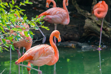Group of Flamingos at a watering hole.