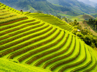 Foto auf Gartenposter Reisfelder Terraced rice field in the mountains of Mu Cang Chai, Yen Bai Province, northern Vietnam