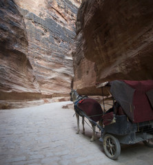 Jordan. Horse carriage in the Petra canyon