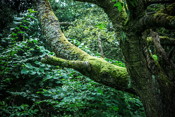 natural green deep jungle