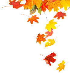 Autumn leaves on white background