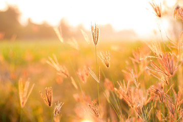 meadow flowers in early sunny fresh morning with water drop . Vintage autumn landscape