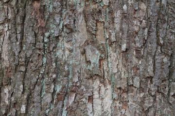 tree bark grunge texture