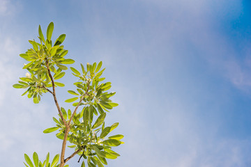 A beautiful green leaves against sky background.