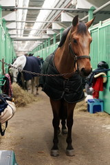 horses in the stables after the show jumping competition