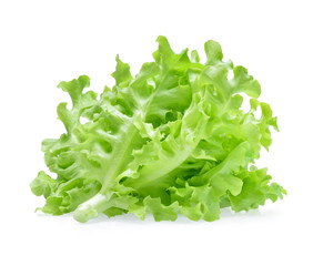 Lettuce, Green oak lettuce isolated on white background