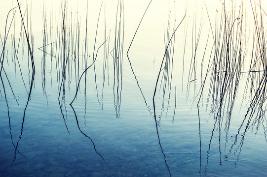 Cane and reflections in the lake