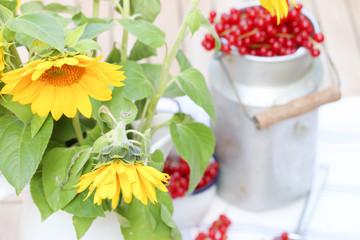Sonnenblumen und Johannisbeeren