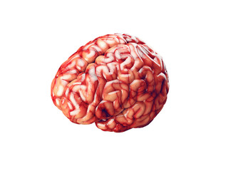 Realistic brain illustration