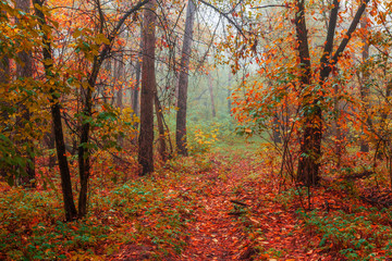 Silent mysterious autumn forest with yellow trees