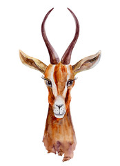 Watercolor gazelle hand drawn cartoon painting illustration isolated on white background, wild animal with curved horns, mascot head springbok, Character design for greeting card, printing