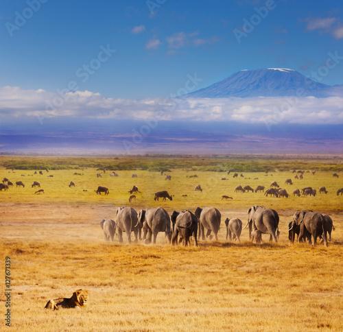 Beautiful African savannah during Great migration