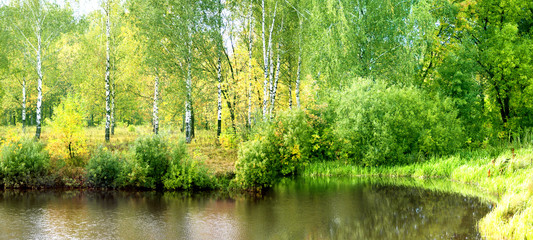 Autumn birch forest on the lake.nature
