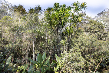 lush jungle vegetation, Madagascar