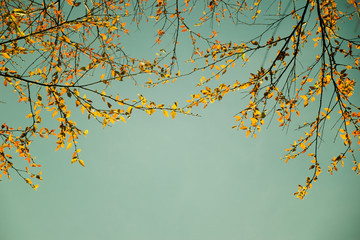 Yellow leaf on branch tree and sky nature spring vintage style