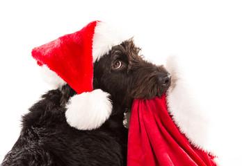 Black dog in santa cap