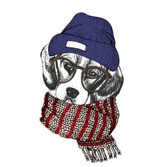 Vector hand drawn portrait of cozy winter dog. Beagle wearing knitted scarf, beanie and hipster glasses.