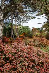 sumac bush and karst vegetation in autumn