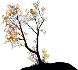 small bare isolated fall tree wit last leaves