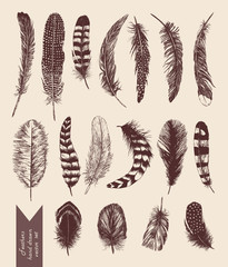 Hand drawn vintage set with feathers. Vector.