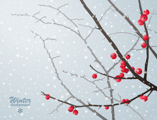 Winter bare branches with red berries