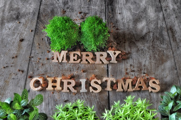 Word of Merry Christmas with plant on wooden background