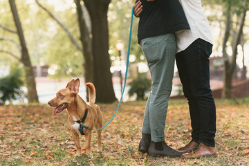 Couple with dog embracing in park