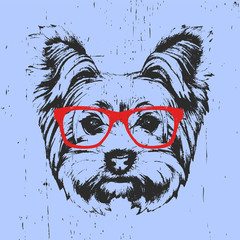 Wall Murals Hand drawn Sketch of animals Portrait of Yorkshire Terrier Dog with glasses. Hand-drawn illustration. T-shirt design. Vector