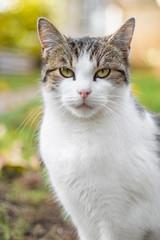 Cat portrait in autumn